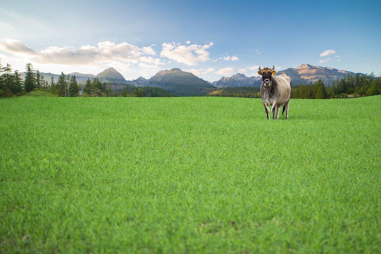 Pourquoi partir vivre à la campagne ?